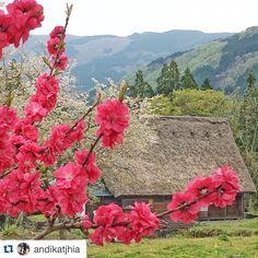 One of the greatest photographers #Repost @andikatjhia with @repostapp.  #springtime#cherryblossom#heritagevillage#japantrip#visitjapan#instatravel#goodtimes#villagelife#mountainviews#lanscape_lovers#scenery#snapseed#vscogood#japanwireless#beautifuldestination by japanwirelesstokyo