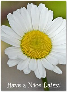 Have A Nice Daisy Note Cards via Etsy.