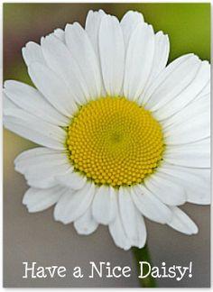 Have A Nice Daisy Note Cards via Etsy.