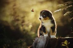 woman creates enchanting portraits of dogs in the austrian wilderness 05