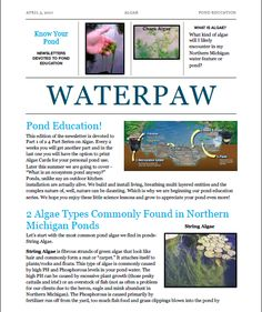 """In fact, I would say that algal concerns are the #1 issue our   clients come to us with.This week we began our client education series and we kicked it off with """"What Is Algae?""""www.waterpaw.net #FrogBlog"""