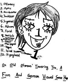 Cranial Nerves (Cute #ed Face)