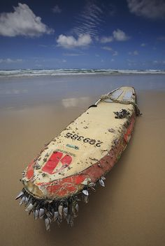Washed ashore by Garry - www.visionandimagination.com, via Flickr