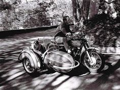Steve McQueen takes his dog for a spin