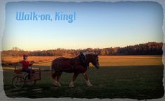After 5 year off, King earns his keep!