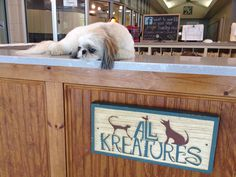 Bo working the front desk at All Kreatures #dogboarding #catboarding #petgrooming #doggydaycare