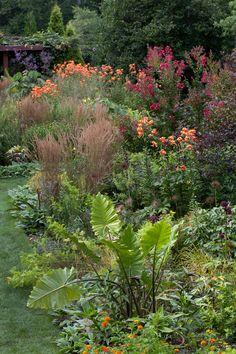 Lilium lancifolium and Lagerstroemia indica [Dynamite] = 'Whit II' brighten up the Tennis Court Garden. Chanticleer, US