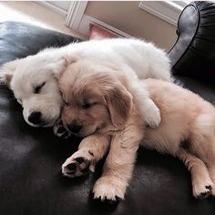 Wonderful Free dogs and puppies golden retriever Style Accomplish you adore your pet dog? Appropriate canine treatment along with coachi Cute Baby Animals, Animals And Pets, Funny Animals, Wild Animals, Cute Dogs And Puppies, I Love Dogs, Doggies, Puggle Puppies, Funny Puppies