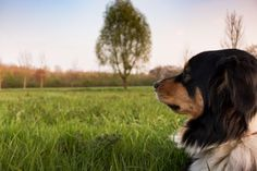 #animal #animal world #brown #concerns #cute #dog #dog training #guard dog #guards #hundeportrait #hunting #meadow #pet #purebred dog #recovery #relaxed #rest #sleep #sun
