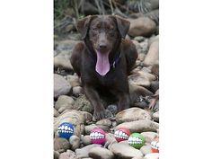 Dog Toy Treat Ball