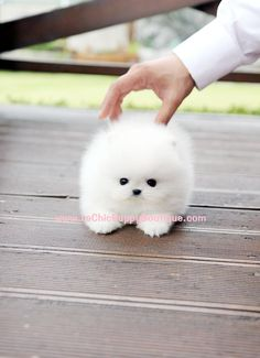 Don't know the name of the dog but it's adorable. I don't generally like small dogs but seriously!?!?! SO CUTE :)