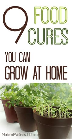 9 of the most medicinal plants you can grow at home, easily! Plus how to use them (on everything!)
