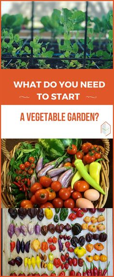 What Do You Need To Start A Vegetable Garden? What do you need to start a vegetable garden? If you are asking yourself what do you need to start a vegetable garden, here is the guide! #urbangardening #urbanfarming #gardening #diy #garden #ugrpost