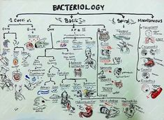 media vessel terminology microbiology - Google Search