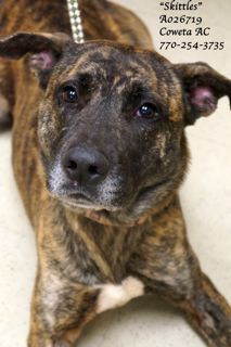 "((EXTREMELY URGENT!)) LAST CHANCE! THIS PET WILL BE EUTHANIZED FRIDAY 2-7-14! ""Skittles"" A026719 Shepherd/ Terrier mix, 3yrs, vaccinated, HW neg.  Meet ""Skittles"" & you will LOVE her!  It's obvious that she was once someone's pet & that they took time to teach her manners.  She's absolutely & positively WONDERFUL, knows ""sit"", ""stay"" & ""lie down"" & appears to get along well w/ other dogs!! Isn't 1 thing not to love about this very special lady.  Watch…"