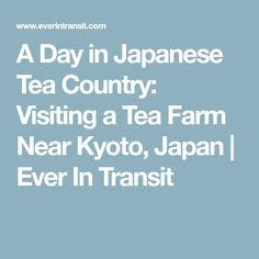 A Day in Japanese Tea Country: Visiting a Tea Farm Near Kyoto, Japan | Ever In Transit