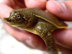 immagine di sfondo turtle gratis - Cerca con Google