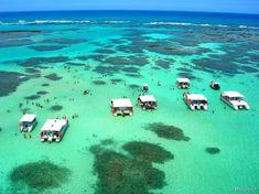 Brasil fantástico: confira 30 paisagens brasileiras espetaculares - Piscinas de Maragogi, Alagoas Em meio a tantas belezas naturais, uma atração se destaca e...