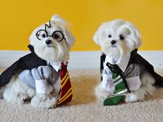 Harry Potter and Draco Malfoy pups