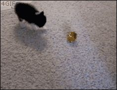 cat toy forcefield