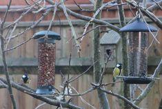 Big Garden Birdwatch