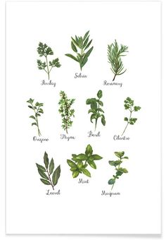 Herbs Collection- Miles of Light. Greens and herbs beautifully printed to make the perfect piece of art for your kitchen