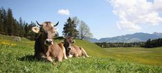 Allgaeu   Ferienwohnung Allgäu - Unterkunft und Ferienhaus im Allgäu (Bayern)
