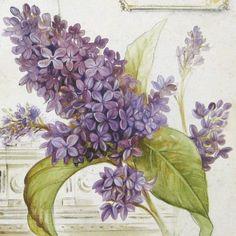 Цветочные и растительные фоны