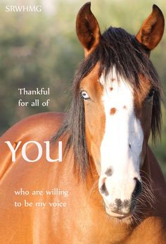 Please help save the wild horses. #SaltRiverWildHorses https://www.change.org/p/u-s-national-park-services-tonto-national-forest-stop-the-annihilation-of-the-salt-river-wild-horses-savewildhorses