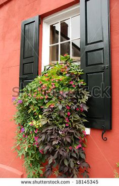 Flowers in a historic home windowbox, Charleston South Carolina - stock photo
