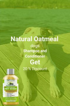 Our Oatmeal Dog Shampoo And Conditioner is recommended by Vets and Specially formulated for pets with allergies to food, grass and flea bites. Can be used for dogs, cats, ferrets and rabbits.. There isNO ALCOHOL, NO SULPHATES, NO ADDED COLORS & NO HARSH CHEMICALS.#homemadeshampoo #shampoo #dogs Homemade Dog Shampoo, Natural Dog Shampoo, Shampoo And Conditioner, Healthy Hair, Allergies, It Works, Dog Cat, Alcohol, Soap