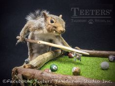 Billiards squirrel, see more on eBay