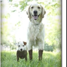 Playing in what mud??