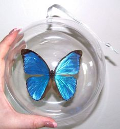 This piece makes the perfect gift for any butterfly-lover! A great addition to the Christmas tree or for year-long display around the house! Morpho Butterfly, Blue Morpho, Blue Butterfly, Butterfly Wings, Winter Christmas, Christmas Tree, Beautiful Butterflies, Holiday Ornaments, Creative