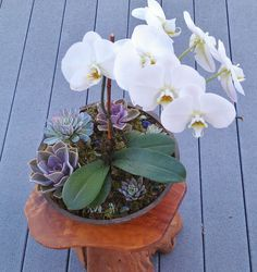 Orchid Weddings on Pinterest | Orchids, Potted Orchid Centerpiece ...