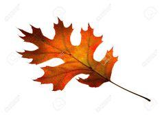 Image result for fall oak leaves