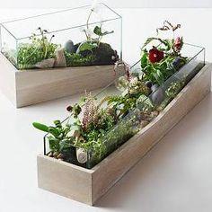 Roar + Rabbit Angled Wood Terrarium, Medium - Planters & Terrariums