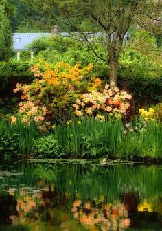 Monet's House in Giverny Claude Monet, Dream Garden, Garden Art, Garden Design, Garden Crafts, Garden Ideas, Beautiful World, Beautiful Gardens, Beautiful Places