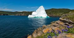 Canada's cool and quirky Newfoundland may become your new favourite destination - Mirror Online