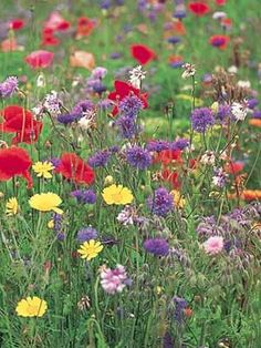 How to… grow a wild flower meadow :: allaboutyou.com.  Along the full length of the back of the house?