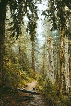 Mount Rainier National Park (Washington) by Brendan Lynch (@btonevibes) on Instagram