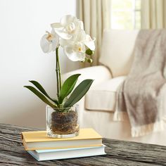 Birch Lane Faux Orchid in Glass Vase, Green & Reviews | Wayfair