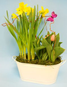 Spring is in the air! A bright design of fresh Spring bulb plants in a metal container is sure to turn any frown upside down. $50.00