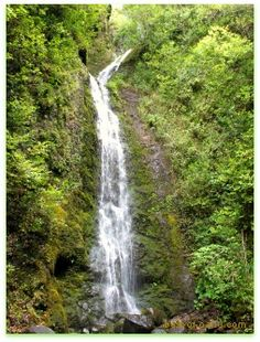 Lulumahu falls is located near the Kaniakapupu Ruins, King Kamehameha III's summer home. One of the best Oahu waterfalls for is its impressive height and adventure getting there.