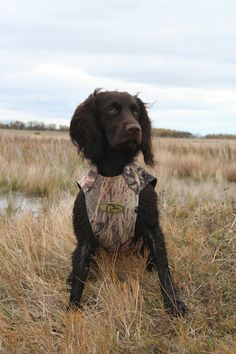 Get all your Retriever Training Products  at www.marshmutt.com