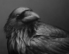 """RAVEN MEDICINE """"Those who carry Raven Medicine also carry a heavy responsibility to Spirit. Raven is the messenger of magic from the great void where. Crow Art, Raven Art, Bird Art, The Crow, Beautiful Creatures, Photo Animaliere, Quoth The Raven, Jackdaw, Crows Ravens"""