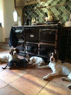 AGA--always wanted this stove, and the dogs as well. Maybe for Christmas this year?