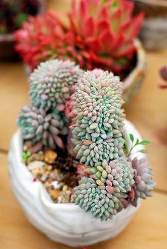 amazing and cute succulent