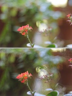 Here is a quick and fun project submitted to our How I Took It Contest by Nick Cool. It shows how to build a soft focus filter (kinda like a lensbaby soft focus) from a small-hole sink filter.  This is what the resulting photographs will look like out of camera.