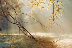 Evolution II fotobehang Morning Sun Rays  Artikelnummer: 1180  Grootte:372CM breed 250CMhoog  Aantal delen: 8  Behangplaksel: Perfax roze  Vliesbehang...